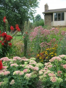 raingarden blooms in September