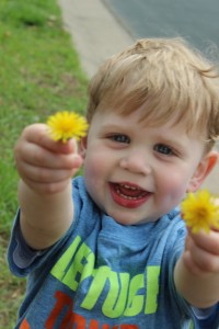 toddler boy with dandelions