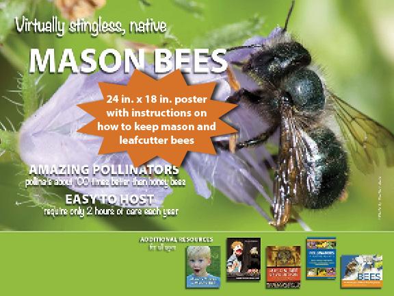 Mason Bee Poster